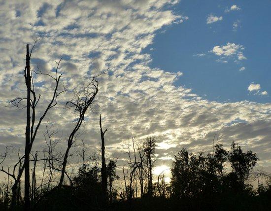 Inn at Folkston: Okefenokee-Swamp
