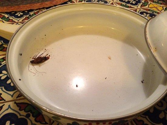 The Puesta del Sol: Cockroach in pan