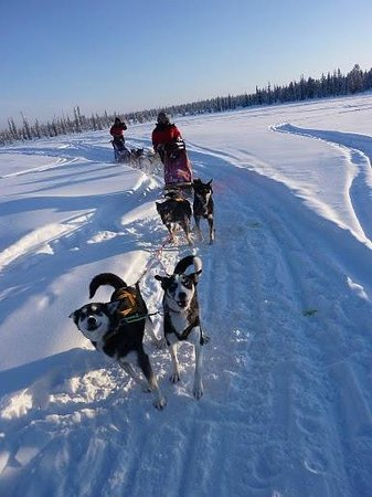 Husky Tours Lapland, Kiruna - Private Tour