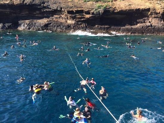 snorkeling on the Quicksilver at Molokini Crater, Maui ... Wailuku