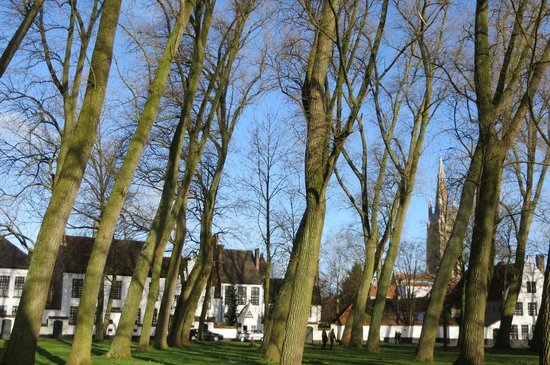 Béguinage : the trees on the green