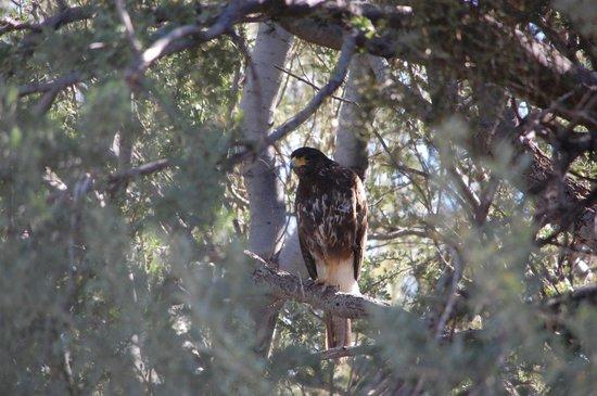Hacienda Linda: Mate in a tree
