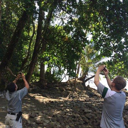 Sirena Ranger Station: Ed and Alvaro shooting a tamandua