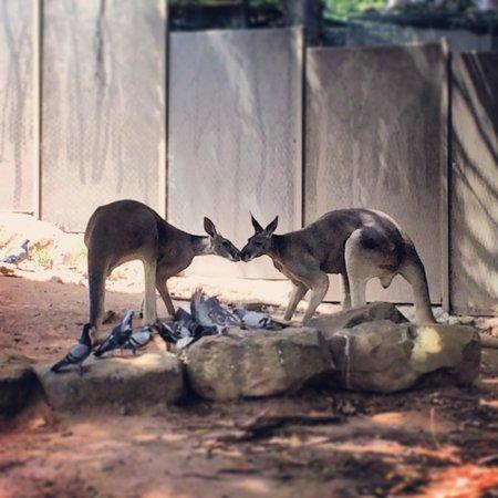 Taronga Zoo: 1