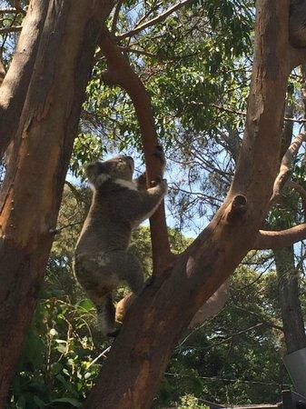 Taronga Zoo: 3