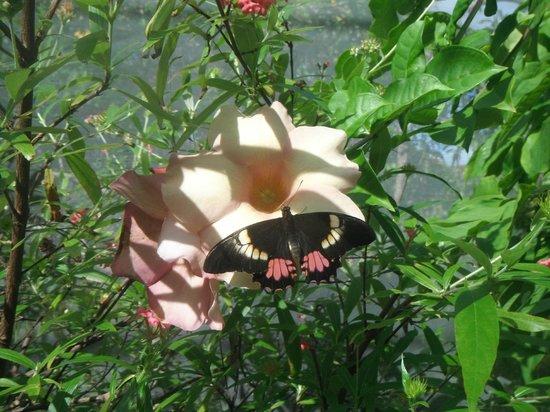 The Butterfly Farm (La Ferme des Papillons): Photo doesnt do this justice....