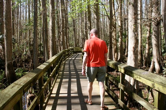 Highlands Hammock State Park: boardwalk through Cypress Swamp Trail