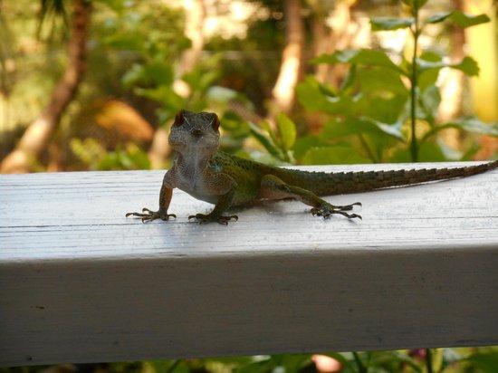 Cocobay Resort : Resident lizard!