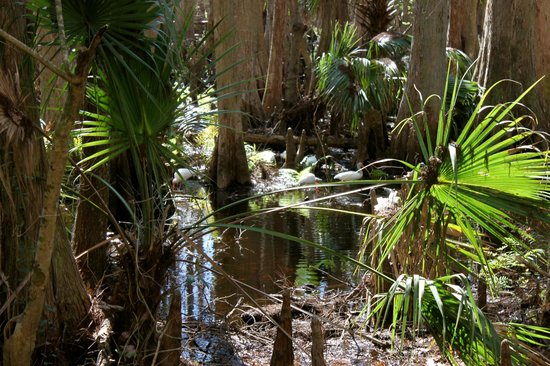 Highlands Hammock State Park: Ibis in the forest