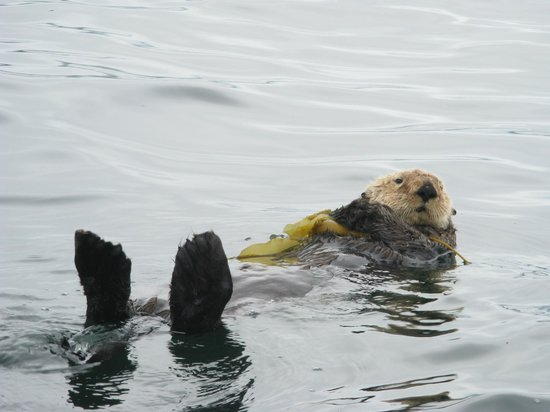 Fishers Island Adventures: Sea Otter