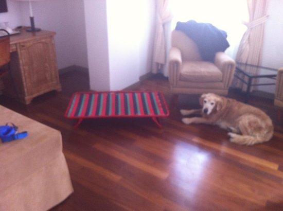 Grand Hotel Minerva: Brandina per il cane