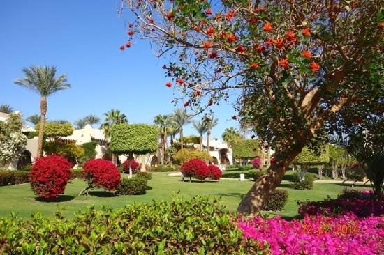 Four Seasons Resort Sharm El Sheikh: Immaculately kept gardens