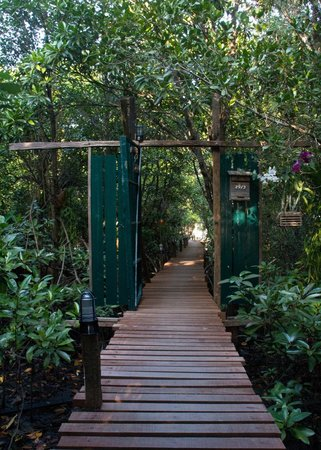 Baan Rim Nam: Walkway over mangroves