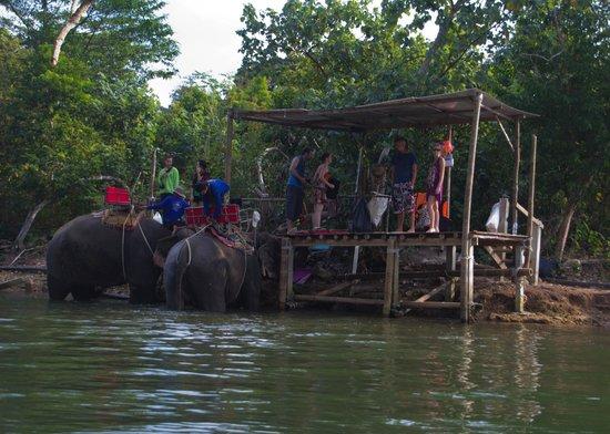 Baan Rim Nam: View of Elephants bathing from kayak