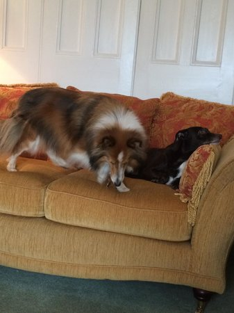 Albany House Bed and Breakfast Peel: Ralphy and Coco