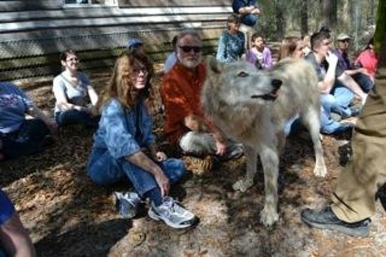 Seacrest Wolf Preserve: Suzy and Beach-Mark with a youngster