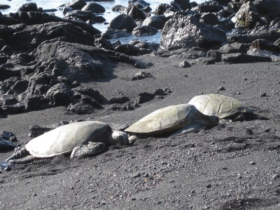 Marylou's Big Island Guided Tours - Private Tours: Black Sand Beach - Sea Turtles