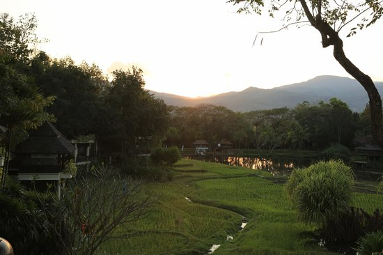 Four Seasons Resort Chiang Mai : View from the Elephant Bar at sunset