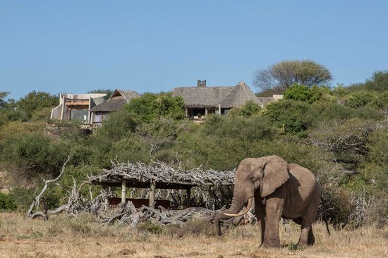 Great Plains Conservation ol Donyo Lodge : Elephant, Hide and Lodge