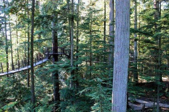 Parque y Puente colgante de Capilano: Piney Woods