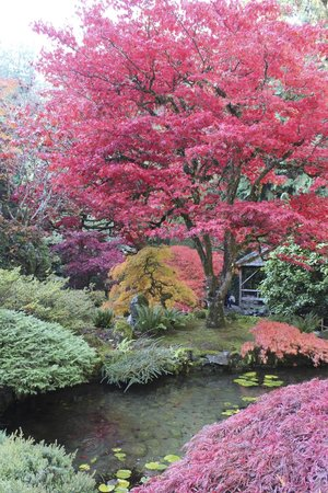 The Butchart Gardens: Stunning colors!