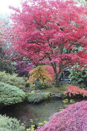 Butchart Gardens: Stunning colors!