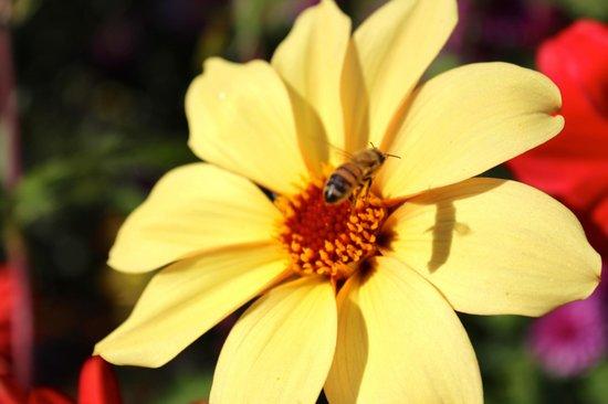 Butchart Gardens: Beautiful Flowers