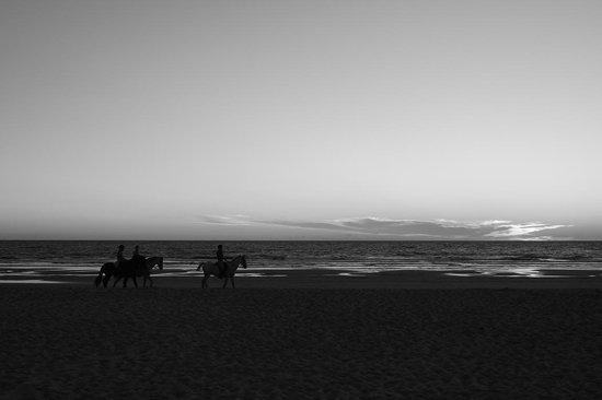 Iberostar Royal Andalus: Caballos en la playa