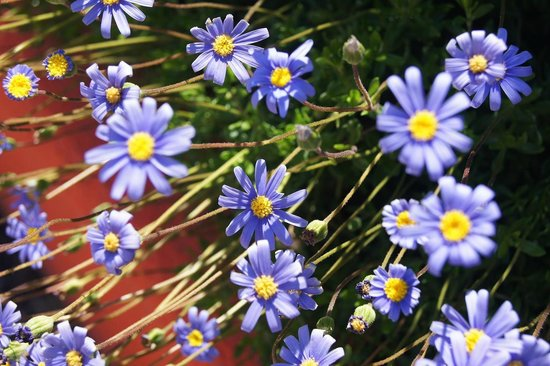 Marbella Playa Hotel: Flores jardín