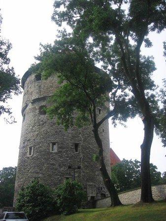 Tallinn Old Town: Молчаливый страж Таллинна.