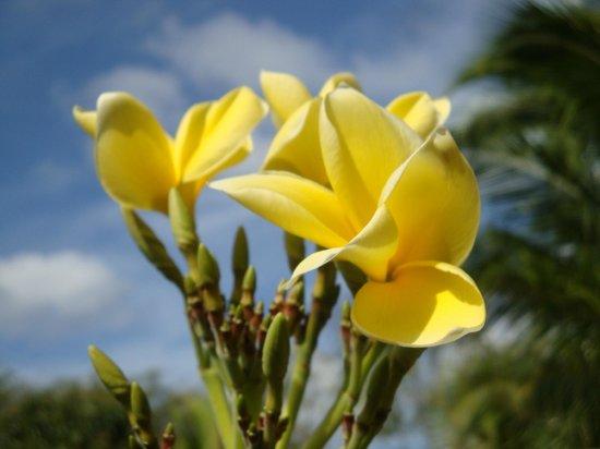 Las Palmas B&B : Flora