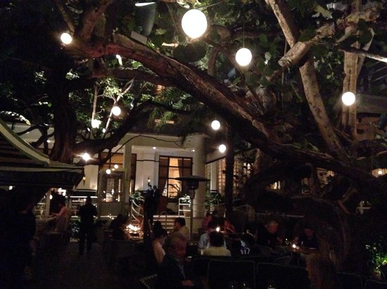 Dining Under The Stars The Trees Picture Of The Restaurant At The Ral