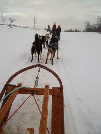 Arctic Adventure Tours: The Huskies