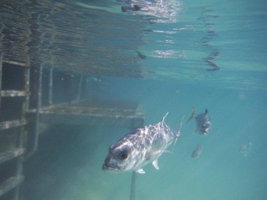 Parc Xel-Ha : plusieurs poissons