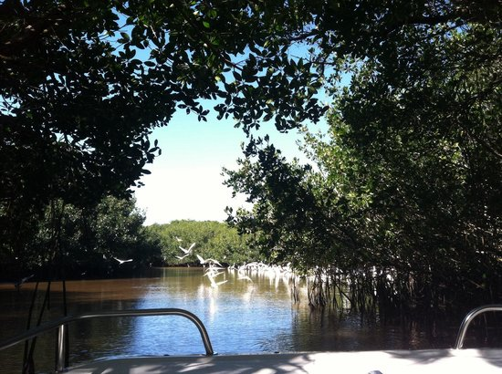 Everglades National Park Boat Tours: Emerging from a mangrove tunnel into a bird-filled clearing