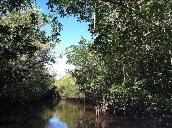 Everglades National Park Boat Tours: Mangrove Wilderness