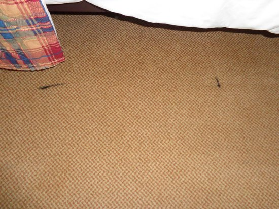 Le Grand Lodge Mont-Tremblant: Stains on carpet