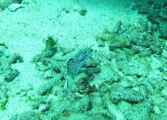 Dive Adventures: Pretty Spotted Eel