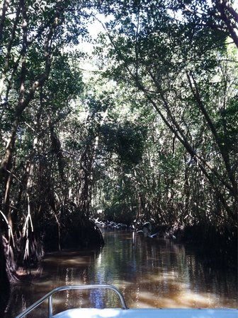 Everglades National Park Boat Tours: Bird-filled labyrinth