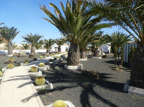 Centro de Arte Canario: Vista del Jardin de cactus