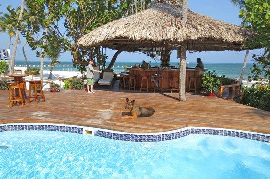 Turneffe Island Resort : Pool and bar area.