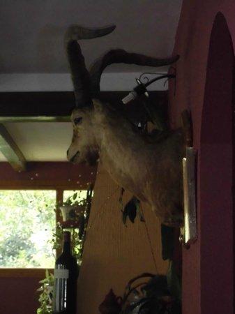 Hostal-restaurante Fogon de Gredos: la mascota del restaurante