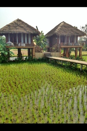 Vieng Tara Villa : Villa