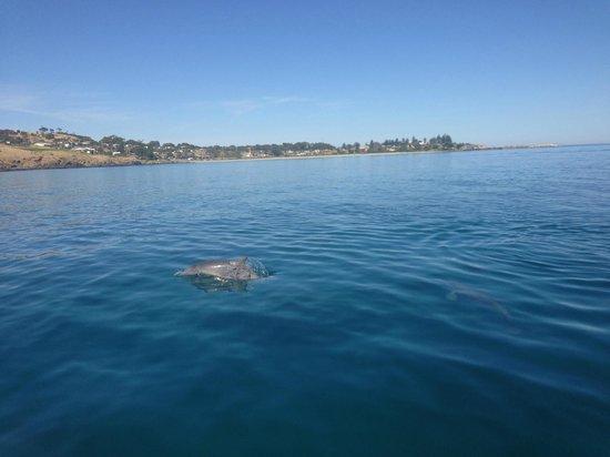 Kangaroo Island Ocean Safari: -