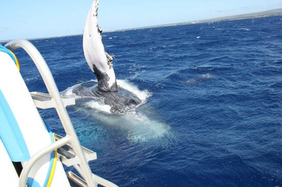 Aqua Adventures : Close Encounter of the Whale Kind
