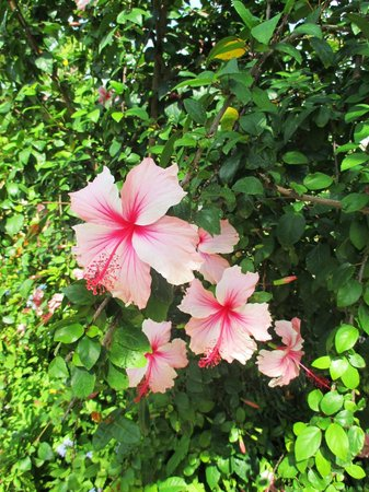 Sandals Royal Caribbean Resort and Private Island: Lovely flowers