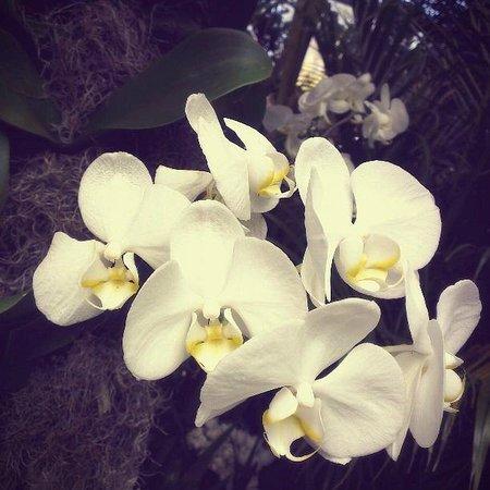 New York Botanical Garden : Шоу орхидей