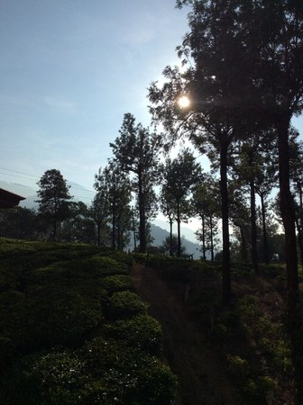 Gruenberg Tea Plantation Haus: Sunrise view from my bed