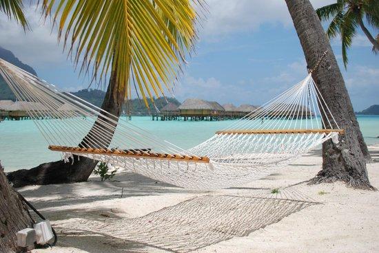 hammocks on the beach - Picture of Bora Bora Pearl Beach ...
