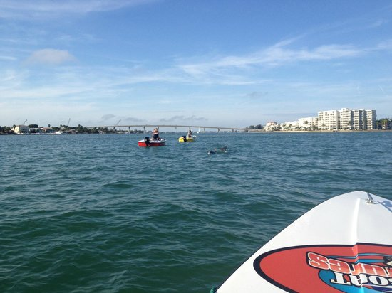 Speed Boat Adventures: St Pete Dolphins